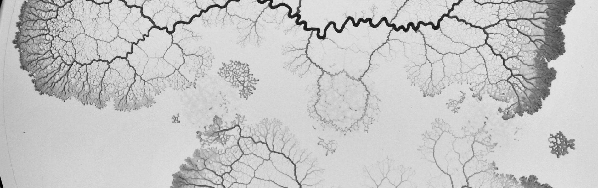 Eine Flüssigkeit zerläuft in einer Petrischale und erzeigt ein Baum-ähnliches Bild.